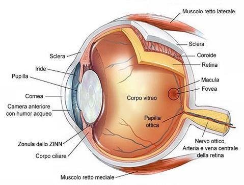 i vermi nella sua cavità oculare